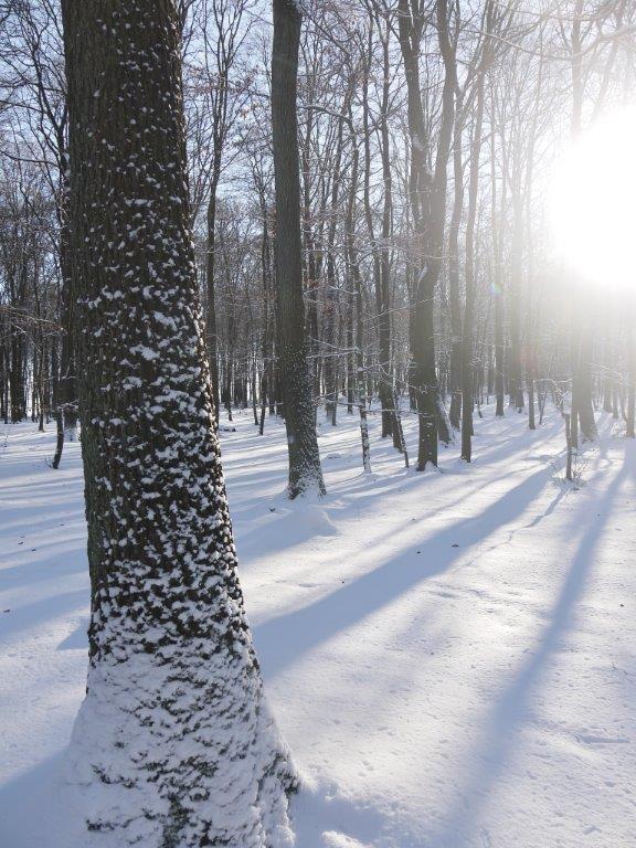 Winter-2014-verkleinert in